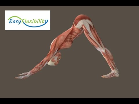 , title : 'How to Downward Facing Dog Yoga Muscle Animation EasyFlexibility'