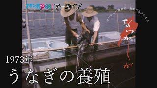 1973年のうなぎの養殖【なつかしが】