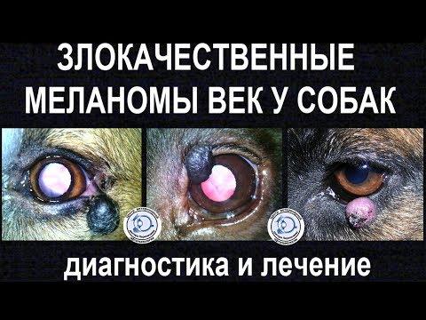 Злокачественные меланомы век у собак
