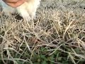 View a video of this puppy