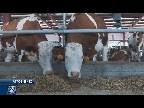, title : 'Симментальская порода коров   Агробизнес