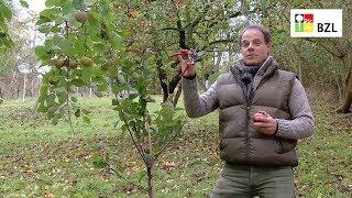 Teil 1: Grundlagen zum Obstbaumschnitt