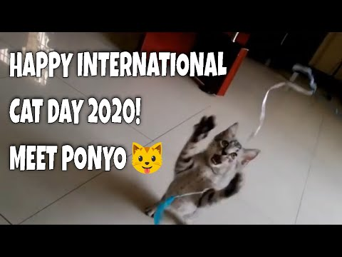 Happy International Cat Day 2020! Presenting our baby Ponyo ❤