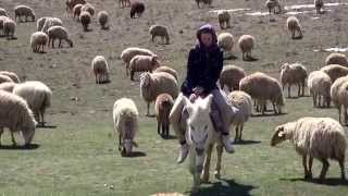 preview picture of video 'Girl riding donkey in Iran'
