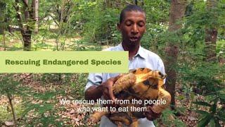 Rescuing Endangered Species in Madagascar   Eden Vlog #11