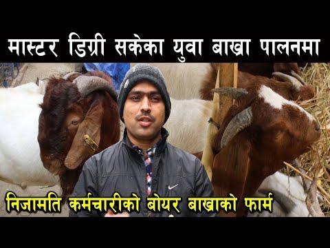 मास्टर डिग्री होल्डर एवं निजामति कर्मचारीको बोयर बाख्राको फार्म - Boer goat farming in Nepal, Tanahu