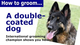How to groom  a double coated dog - Dog Grooming demonstration