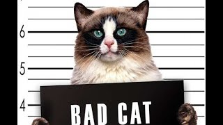 funny.animals.clips • bad cats TOP 2018 плохие котики