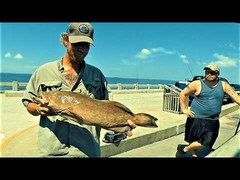 GAG GROUPER HOOKUPS AND SNAPPER LIMITS!!{skyway pier}