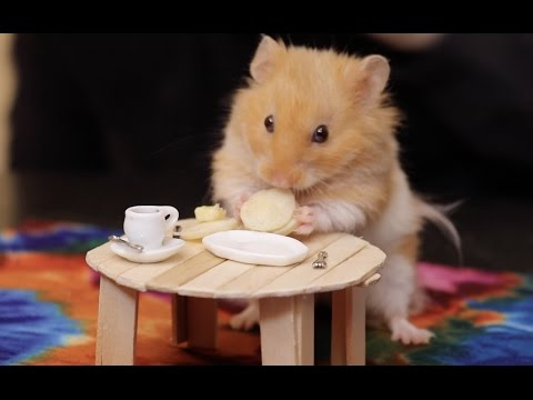 Making Tiny Things For Our Hamster
