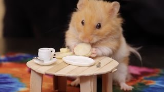 Video's up: Making Tiny Things For Our Hamster