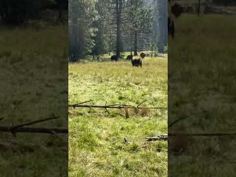 Video Of Tenmile Campground, CA