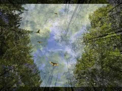 Over the treetops Lyrics – A-ha