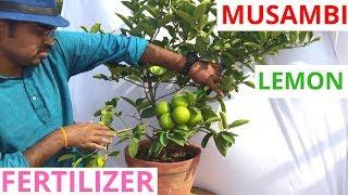 Best organic fertilizer for lemon plant.
