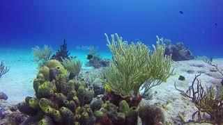 Rock Beauty Angelfish in Cozumel
