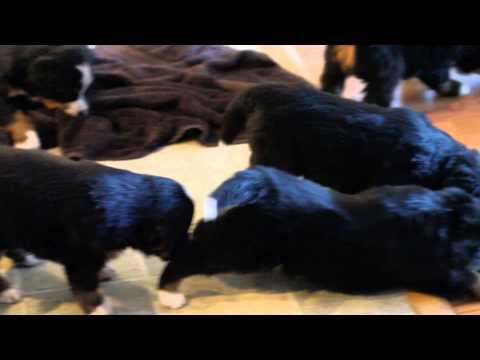 Kristoff and his siblings!!