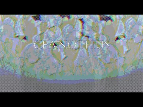 Ceanothus feat. Oliver {Vocaloid Original}