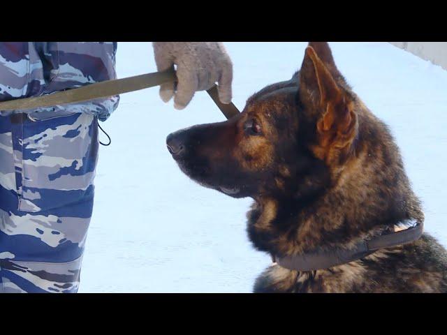 Служебный пёс помог выйти на след грабителя