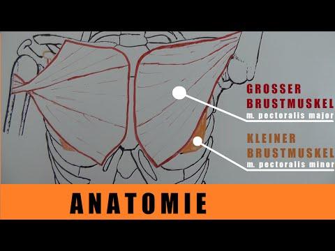 Analgetika zur Schmerz in Knie