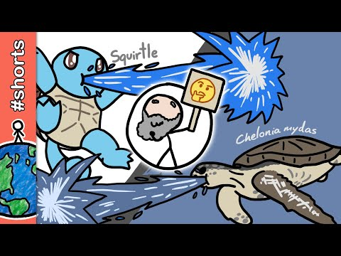 Squirtles existem? #shorts