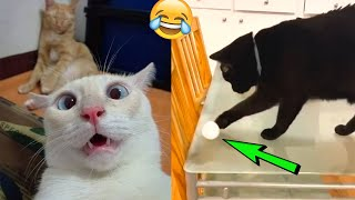 TRY NOT TO LAUGH 😂 | Cute Pet Reaction Videos of 2021 😍🤣😺🐶