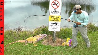 FISHING For RARE IGUANA Species in FLORIDA!