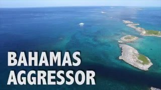 Bahamas Aggressor!