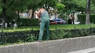 Бензопила или садовые ножницы? Как подравнивают кусты в парке