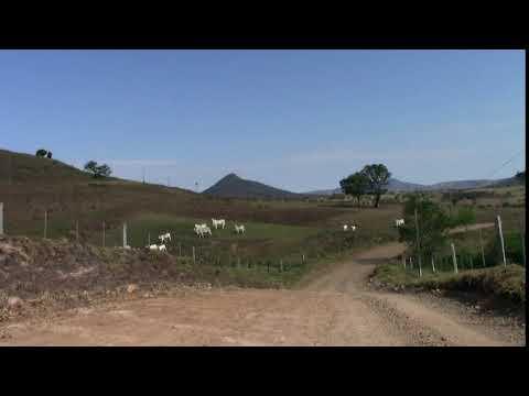 Estrada de terra e bois ao fundo