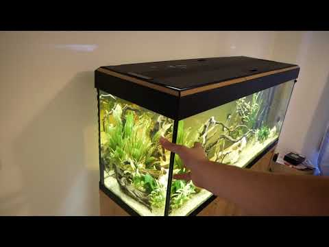 An Introduction to the Fluval Roma 240 Fish Tank Aquarium