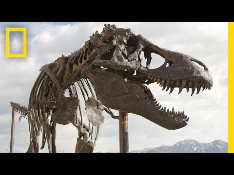 How a Giant T. Rex Packs for a Road Trip | National Geographic thumbnail