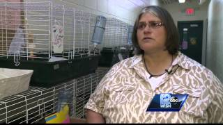 Couple accused of chinchilla abuse charged with child neglect