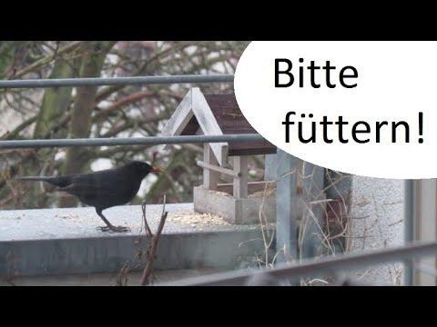 Vögel füttern?! JA BITTE! - einfach & günstig Futter zubereiten
