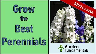 How to Grow The Best Perennials 🌸🌸🌸 Mini Course on Growing Perennials