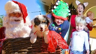 CHRISTMAS PUPPY SURPRISE! - SANTA CAUGHT ON CAMERA- Daily Bumps Christmas Special 2016!