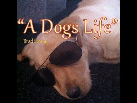 A Dogs Life