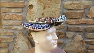Sea Turtle Hat Kickstarter