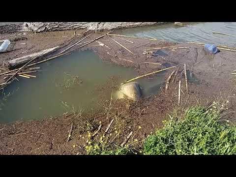 Video che pesca nellinverno su chudsky