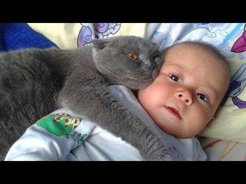 Adorable Video: Cuando Tu Gato Cuida De Tu Bebé