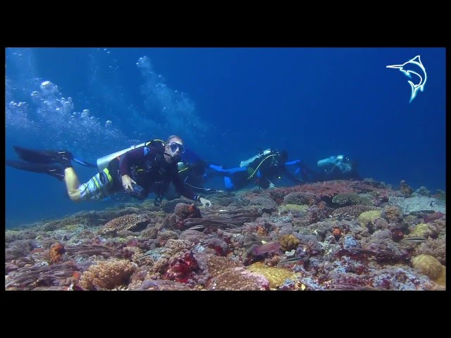 Blue Marlin Komodo Promotional Video