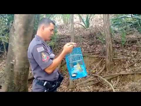 Polícia Ambiental resgata pássaros em Adamantina