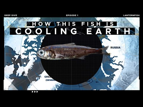 This Tiny Fish Is Cooling Our Planet