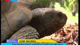 Afrika mashariki: Bendi la walemavu nchini Tanzania