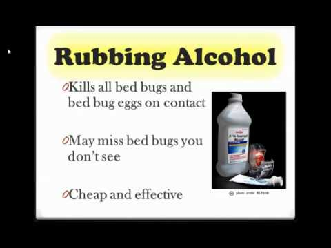 Pesticides For Bed Bugs Over The Counter