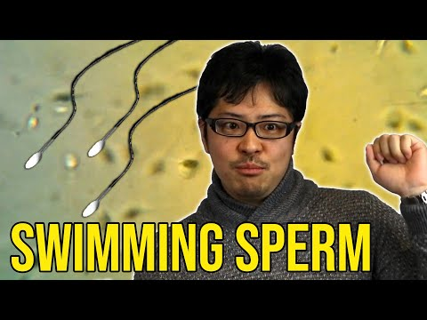 <p>The tail (flagellum) of the sperm does not simply push the body, but uses a rhythmical beating with pushing and fraying over a 4-beat pattern, as demonstrated in the video.</p>