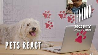 Mis huellas a casa (A Dog´s Way Home) - Reacción de perros y gatos a la película.