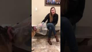 Helping Paws Neuter