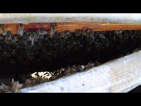 Состояние пчелы в марте на пасеке