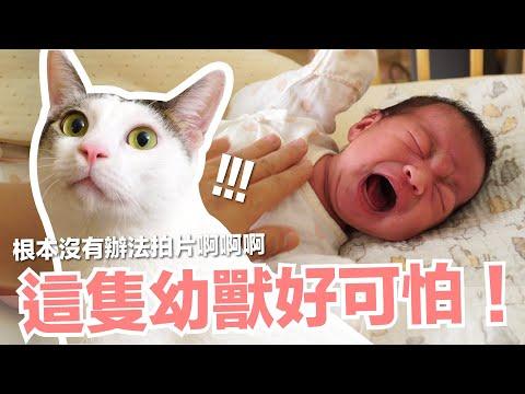 好味小姐養貓記,小貓們對小嬰兒有多好奇?