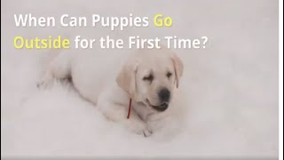 When Can Puppies Go Outside for the First Time?